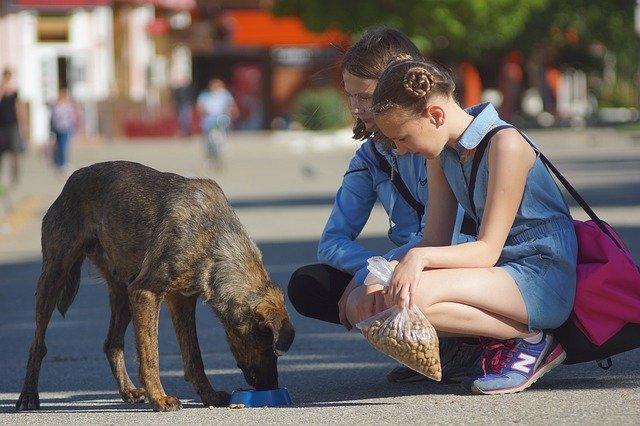 Faithful dog follows to thelast